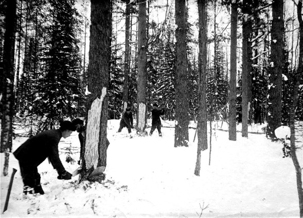 Logging in Finland, early 1900s.