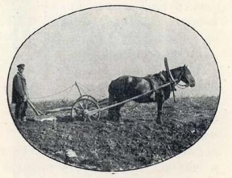 Type of plow used by Siberian peasants.