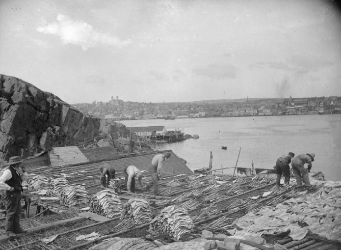 Drying cod at St. John's, Newfoundland.